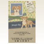 ネットスクウェア犬種別年賀状チワワ×ダックス