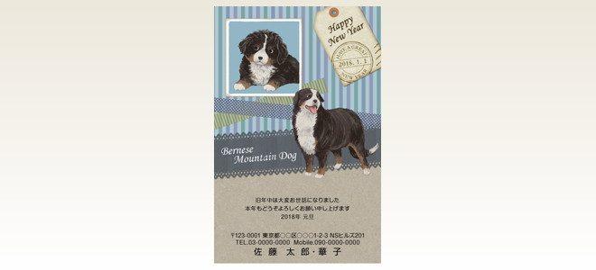 ネットスクウェア犬種別年賀状バーニーズマウンテンドッグ