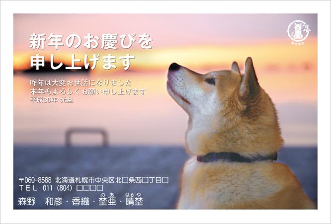 2018年柴犬まるデザイン年賀状印刷-3