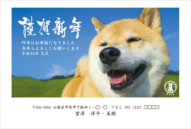 ネット限定柴犬まる2018年(H30年)年賀状デザイン-3